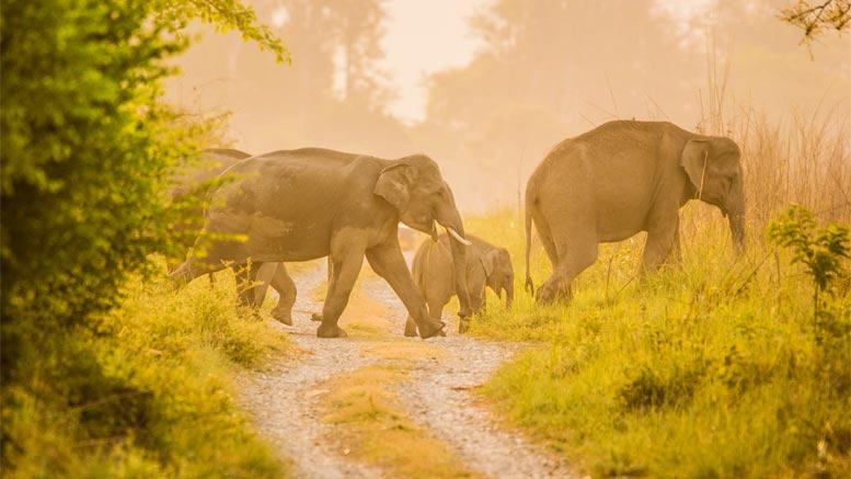 Kumaon Nature & Wildlife