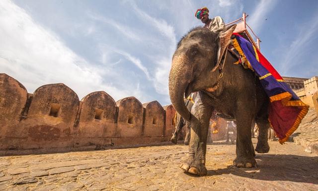 Rajasthan Regalers
