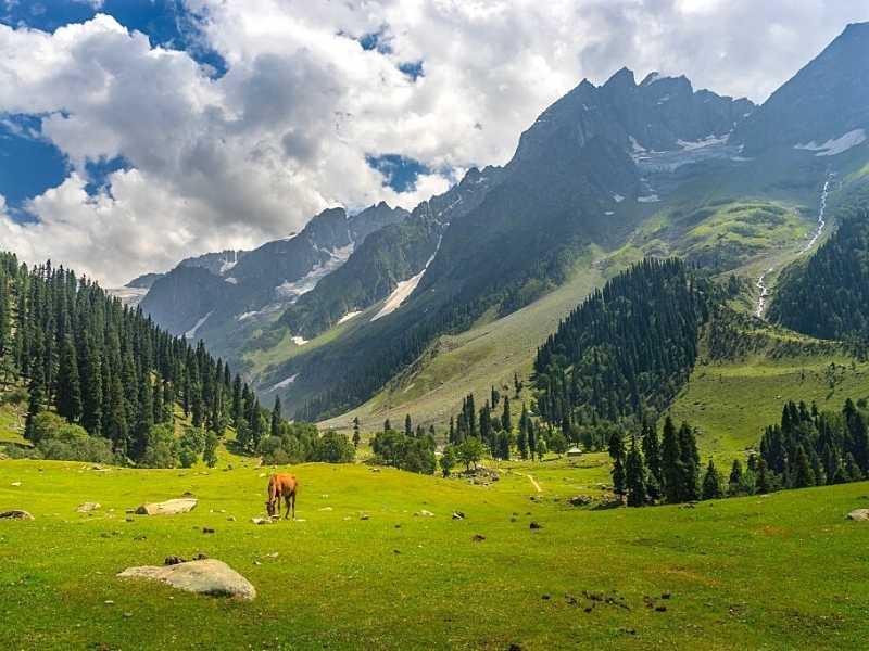Scintillating Kashmir